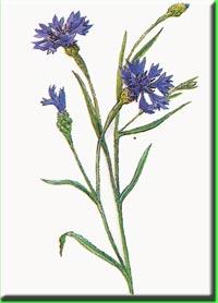 Названия сказок по цветок